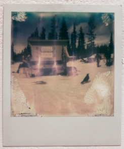 Huskies and Raven (Banff), 2016, Polaroid Photograph